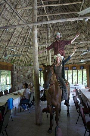 Banana Bank Lodge & Jungle Horseback Adventure: So a horse walks into a bar...