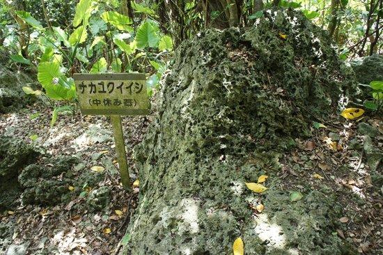Kakinohanahija: かつてここを訪れる人がナカユクイ(中休み)したと言う石。