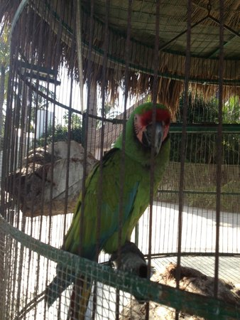 Marival Resort & Suites: Parrots near the lobby