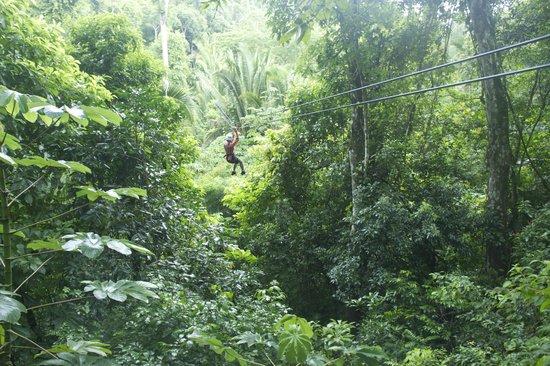Ian Anderson's Caves Branch Jungle Lodge: Ziplining
