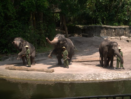 the elephants picture of singapore zoo singapore tripadvisor. Black Bedroom Furniture Sets. Home Design Ideas