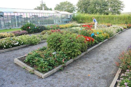 Jardin botanique roger van den hende photo de jardin for Jardin universitaire