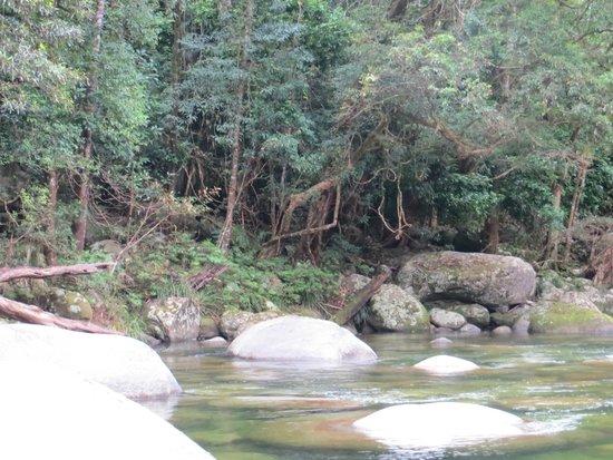 Down Under Tours - Day Tours : Daintree Rainforest
