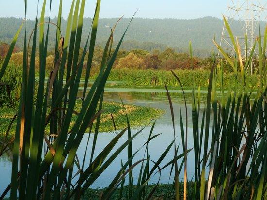 Arcata Marsh and Wildlife Sanctuary: Arcata Marsh & Wildlife Sanctuary