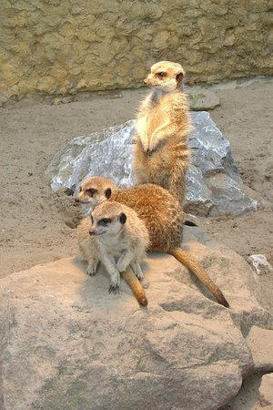 Zoo Plock