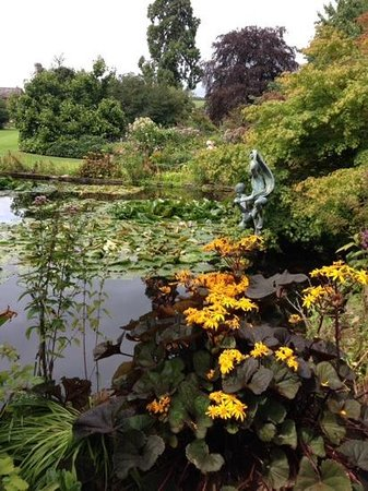 Ullingswick, UK: lilly pond