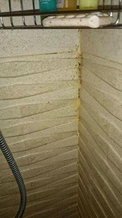 Royalton Punta Cana Resort & Casino: salle de bain remplie de fourmis