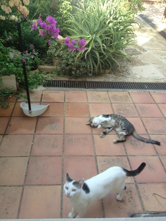 AgioKlima Tradional Houses: morning visitors in the garden