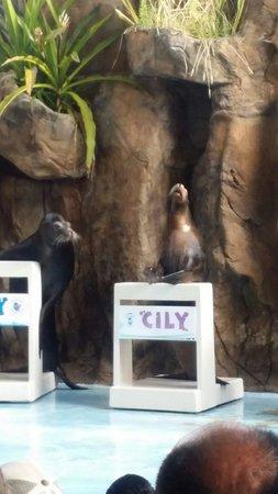 Acuario Mazatlan: Show de focas adorables :)