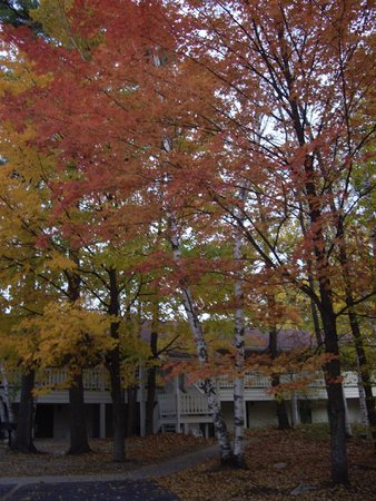Parkwood Lodge: Beautiful fall color