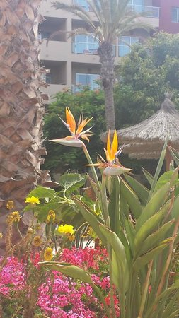 Elba Carlota Beach and Convention Resort: Grounds very well maintained. Beautiful colours.