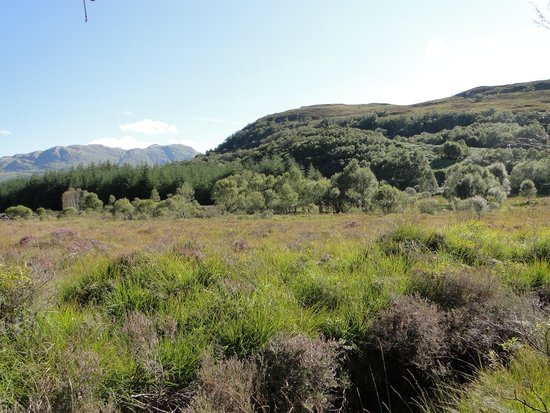 Highland Titles Nature Reserve: Our plot is 350 yards 'over there somewhere'.  You can see the deep crevace with a stream we wer