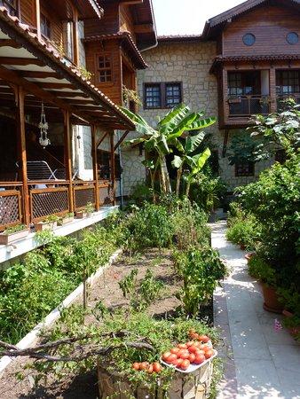 Villa Onemli Hotel: Home grown tomatoes