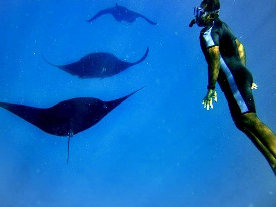 Octopus Resort: Mantaray Snorkel