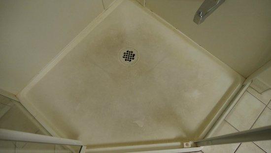 Travelodge Owen Sound ON : Shower floor was filthy