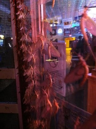 Frosty Bar Incorporated: Mayfly invasion.