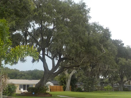 Lakeside Inn and Cafe : live oaks