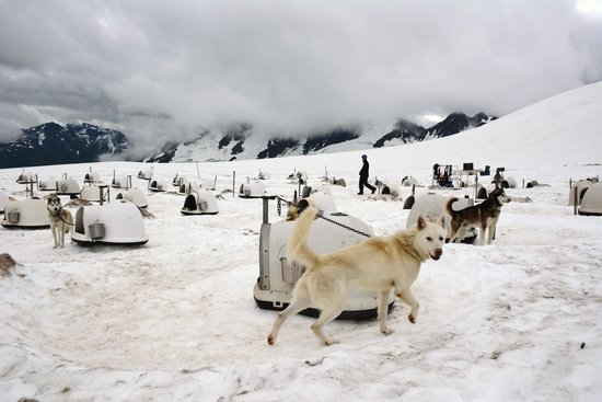 Alpine Air Alaska: The glacier is home to 50 Alaskan Huskies training for the Iditerod and other dog sled races.
