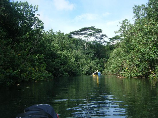 Wailua Kayak Adventures: Kayaking down the Wailua River.