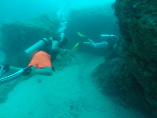 PV Sea Dive: Friend saying hi