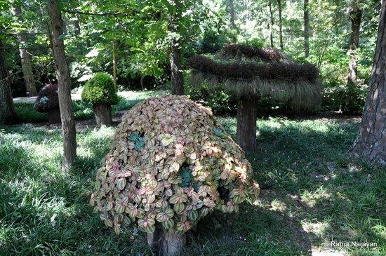 Bigfoot Does Exist Picture Of Garvan Woodland Gardens Hot Springs Tripadvisor