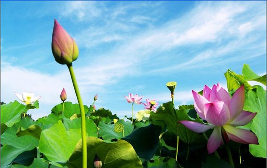 Red Lotus Travel - Day Tours