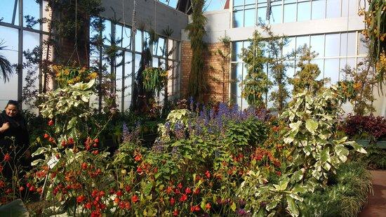 Auckland Domain: Jardin