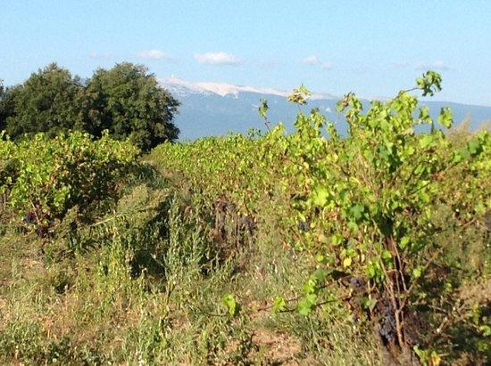 Mas Pichony : Vue depuis la piscine Le Mont Ventoux