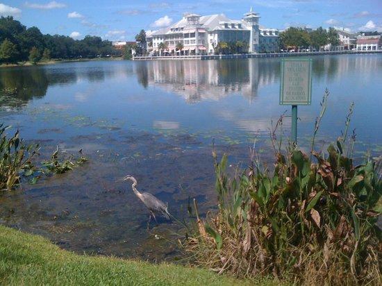 Bohemian Hotel Celebration, Autograph Collection: Bohemian hotel, Celebration, Florida