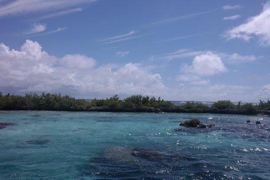 Reef Discovery: Pure Snorkeling