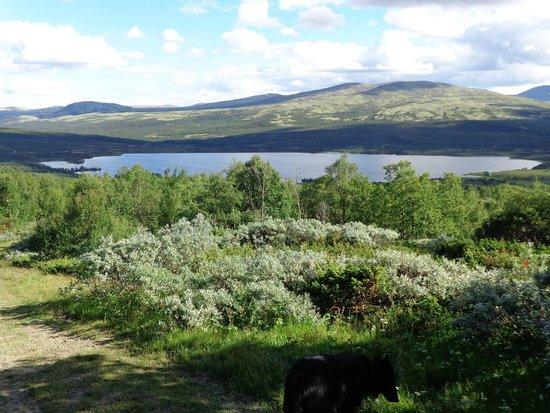 Hjerkinn Fjellstue og Fjellridning: View from hotel grounds