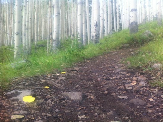 San Francisco Peaks: Among the Aspens