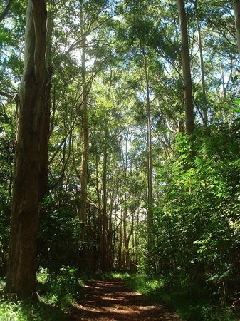 Makawao Forest Reserve