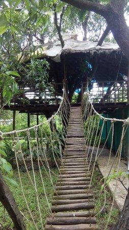 Tarpa (Save Farms): h