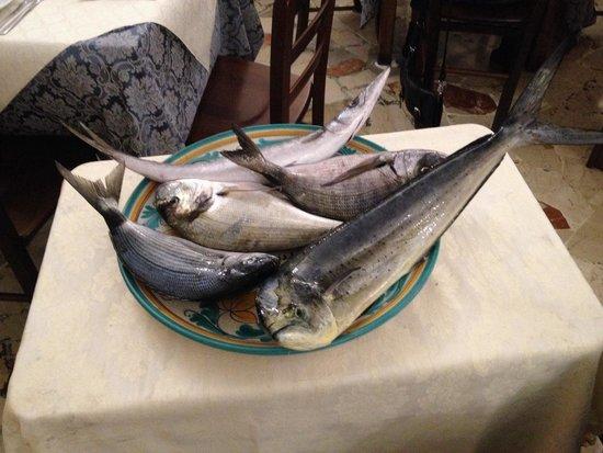 Ristorante Trattoria Andrea Il Pirata: Il pesce fresco è di casa