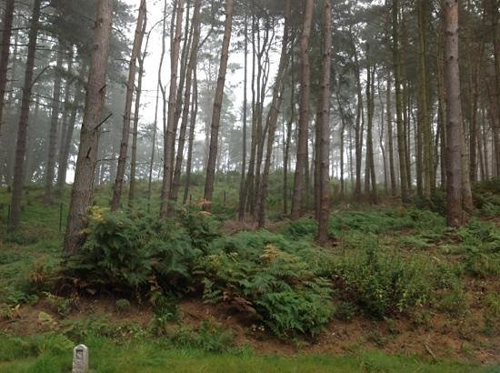‪‪Center Parcs Woburn Forest‬: View from the back door of our villa‬