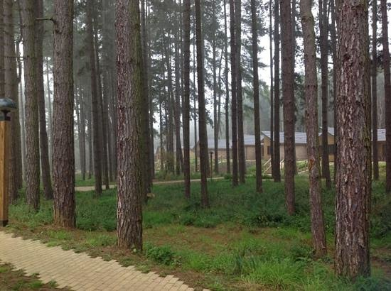 ‪‪Center Parcs Woburn Forest‬: View from the front of our villa‬