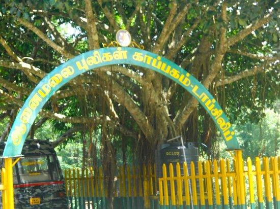 Topslip Tiger Forest: Top Slip Information center