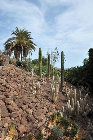 Jardin Botanico: Fusión de continentes verdes
