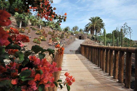 Jardin Botanico: Jardín semitropical