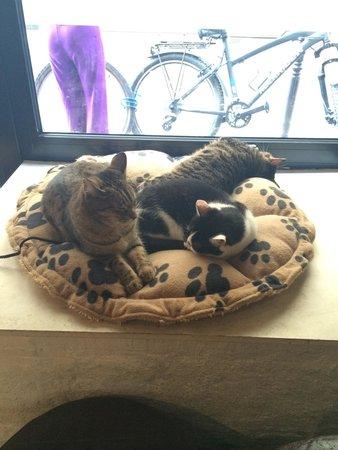 Le Cafe des Chats: Les squatteurs de la banquette !