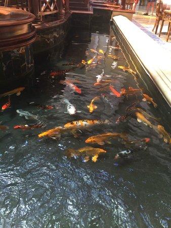 SENTIDO Palm Royale: Atrium koi carp