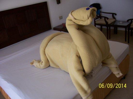 إلفيسطون رزورت: il cammello