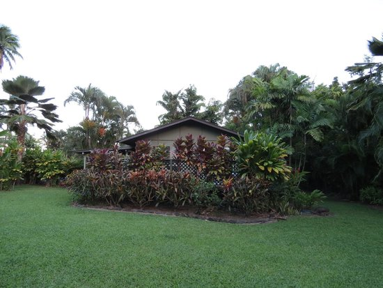 Hana Accommodations: View from back yard