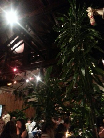 Blue Elephant Paris: Dining amidst exotic treas & flowers.