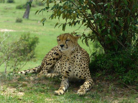 Sognando il Kenya: siesta