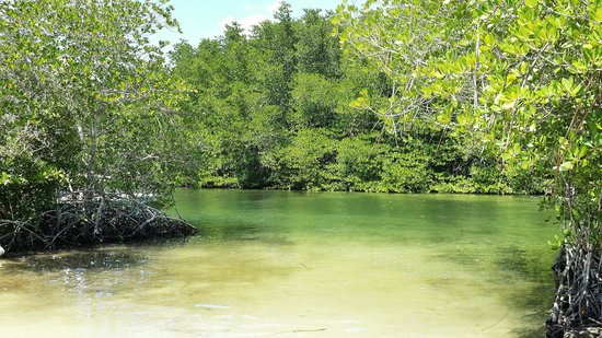Image result for MANGROVE FORESTS NUSA LEMBONGAN