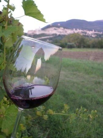 Azienda Agraria Saio: degustazione cabernet sauvignon!