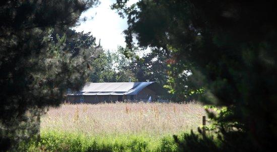 Thornham Bay - Wild Luxury: Tree View