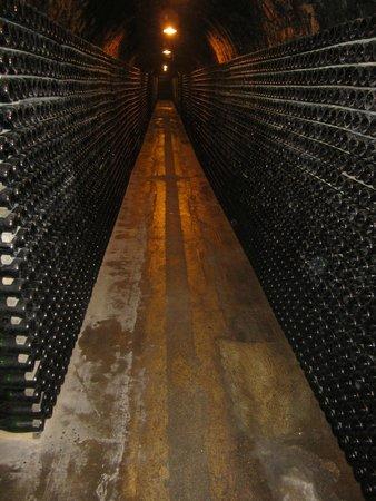 Segura Viudas Estate: Wine cellar